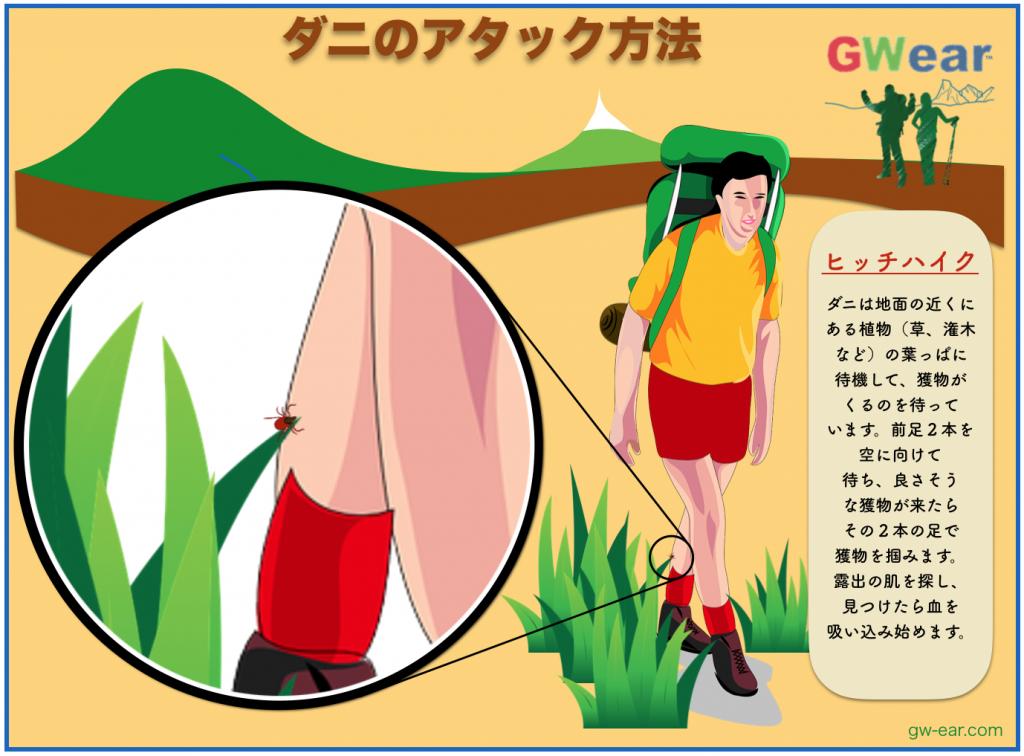 ダニ_対策対処1_gw-ear.com